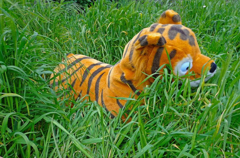 TONY ... El Tigre